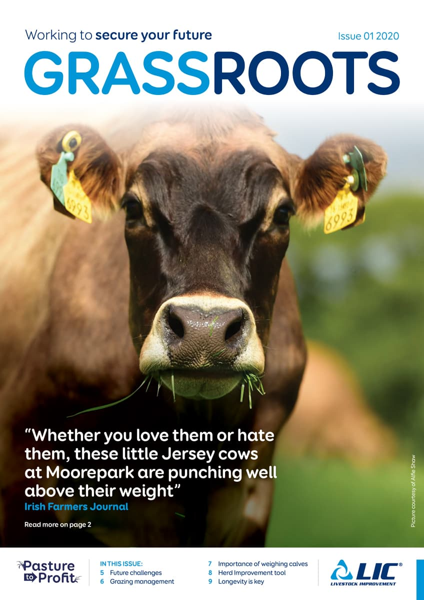 LIC UK GrassRoots, Issue 01, Summer 2020 - Cover Image