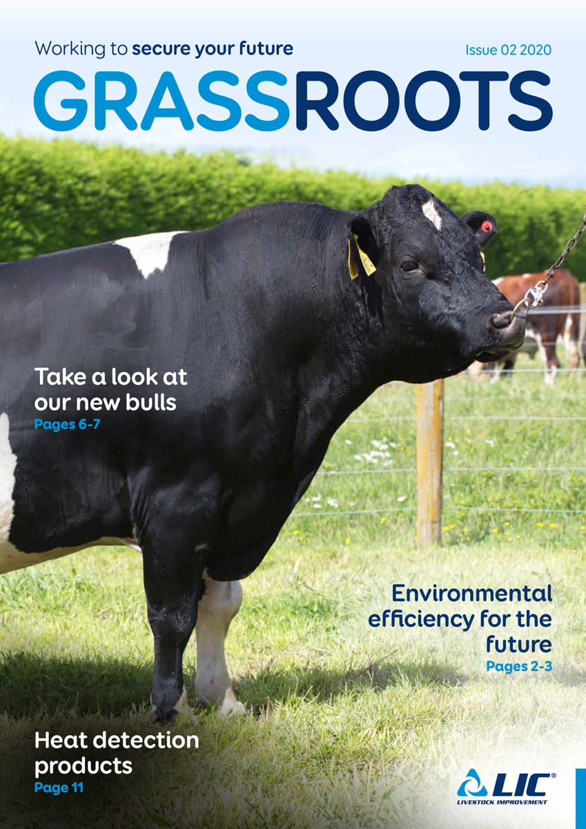 LIC UK GrassRoots, Issue 02, Autumn 2020 - Cover Image