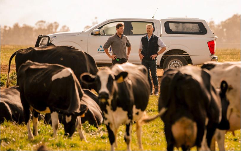 LIC_staff_farmer_cows_in_field