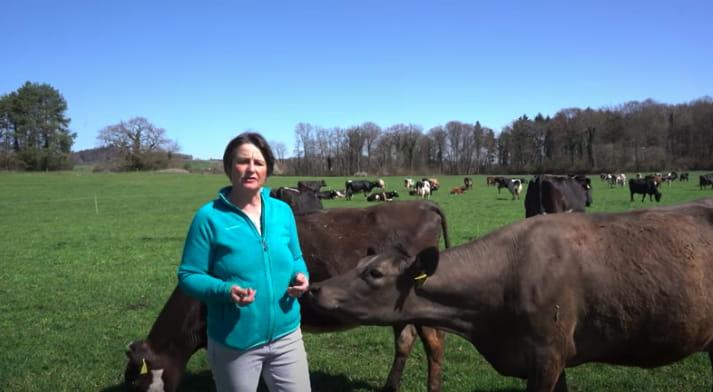 Susanne Kach switzerland KiwiCross cows