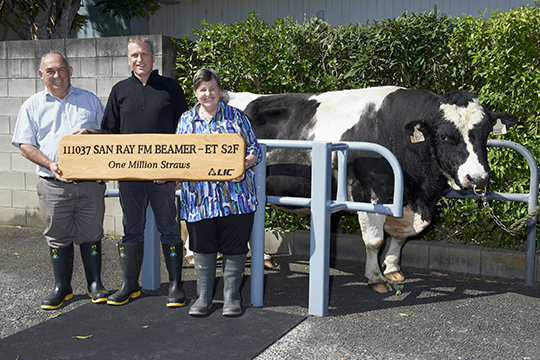 Ray and sandra Hocking Beamer bull