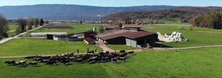 swiss_dairy_farm_susanne_kach
