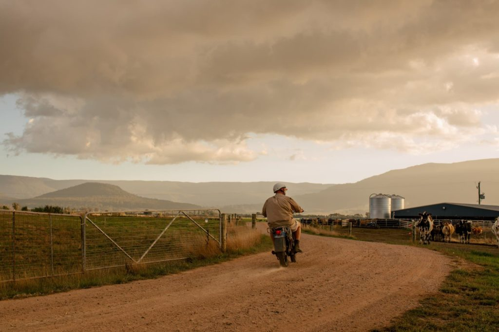 Dairy farmer heading to milking on a motor bike